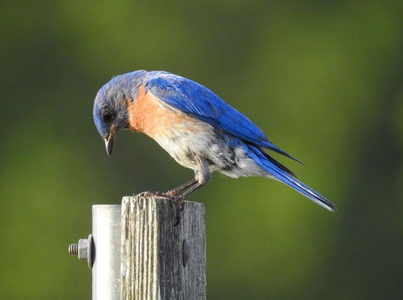 2019 annual conference of  the Ohio Bluebird Society set