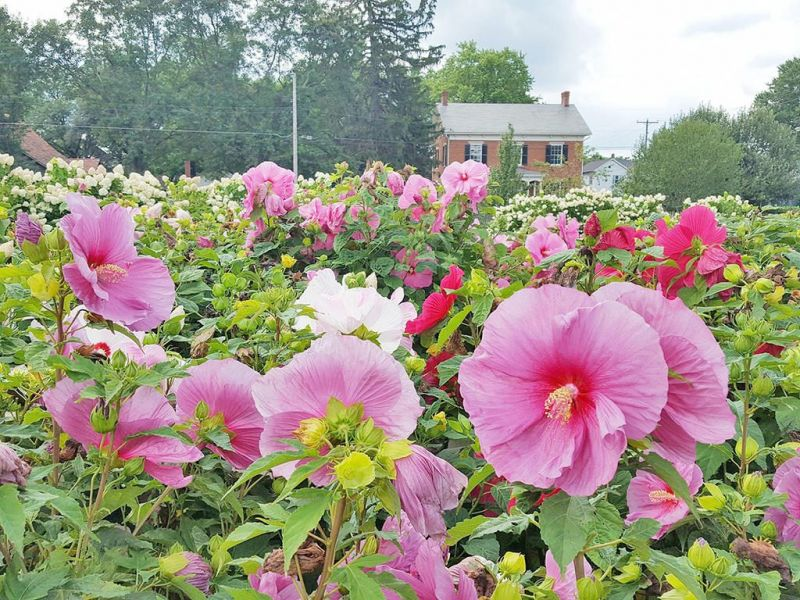 'Beyond the Fences of Zoar' luncheon to be held in the garden