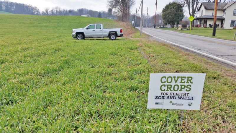 Cover crops help reduce soil erosion