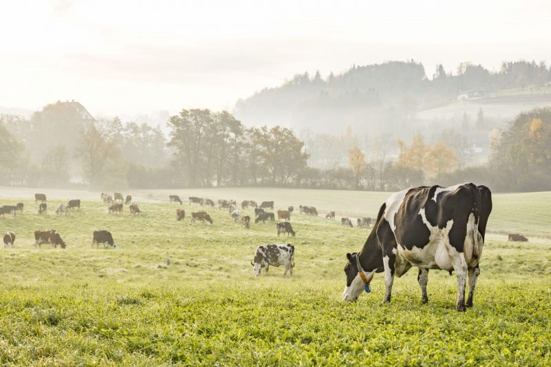 Grazing Conference for Dairy brings ag community together