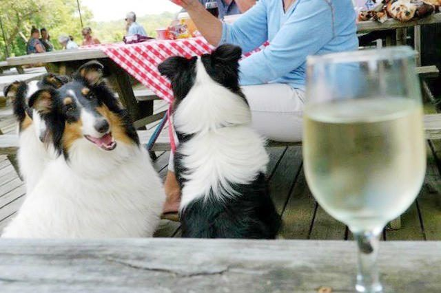 Dogs invited to take their humans to the vineyard