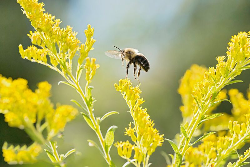Food and habitat are the most important factors in helping bees