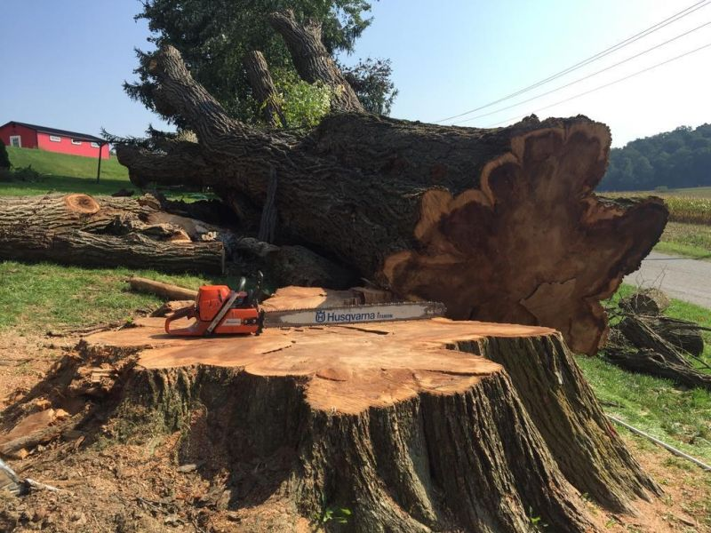 Giant tree comes down in Trail