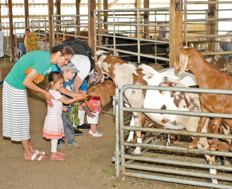 More fun on the farm: Expanded petting zoo and animal farm offered