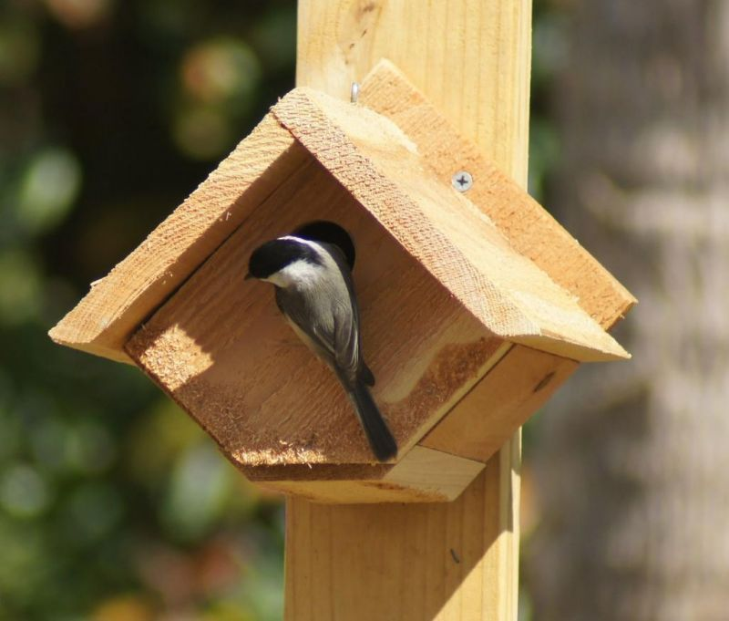 Norma Johnson Center offers make-and-take birdhouse workshop