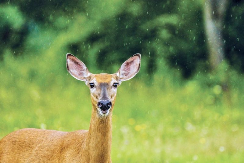 Ohio heads into peak time for deer-related crashes