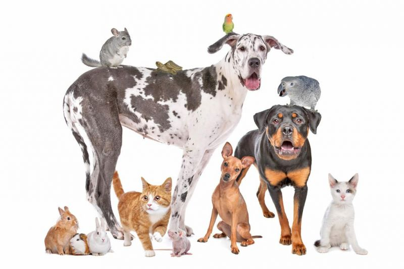 Smithville church to host Blessing of the Animals