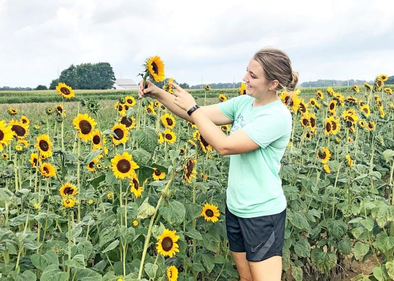 Sunflowers are in bloom at September festival
